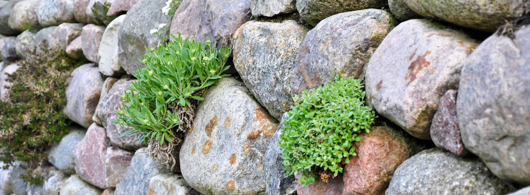 Findlinge als Quellsteine, in Trockenmauern oder im Teich aus Berlin